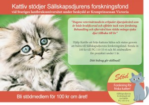 Kattliv stödjer Sällskapsdjurens forskningsfond