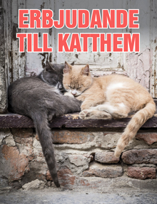 Kattliv stöder katthem