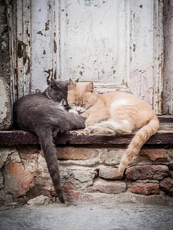 kattlivs ervjudande till katthem