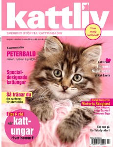 Kattliv magasin